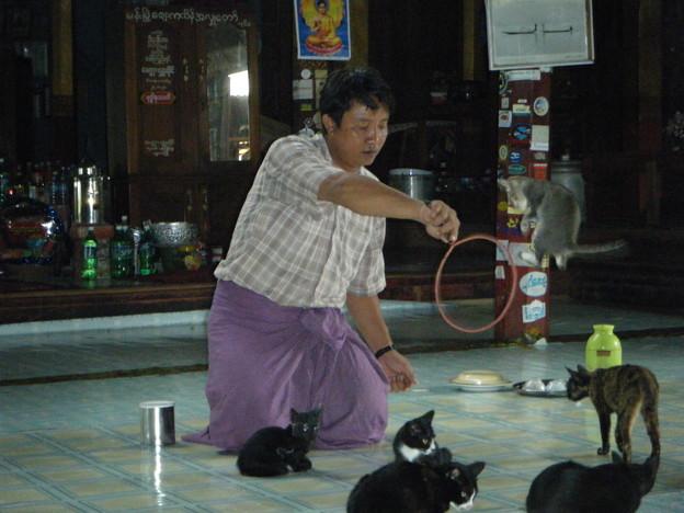 猫の輪潜り