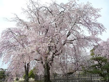 110417-姫路城 (199)