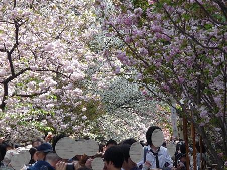 110417-造幣局 桜の通り抜け (88)