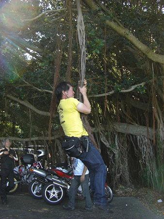 山さんのなる樹