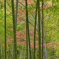 写真: 竹林の中で・・・秋