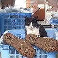 Photos: 長靴を脱いだ猫