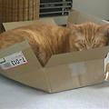 写真: 箱小さい