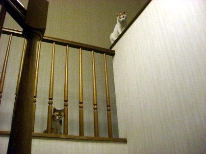 ネコは高いところが好き