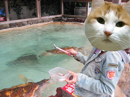 海亀にゴハンを。