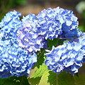 写真: 2009_0531_160441-P1020830