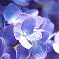 写真: 2009_0531_155936-P1020824