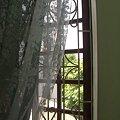 写真: 窓から