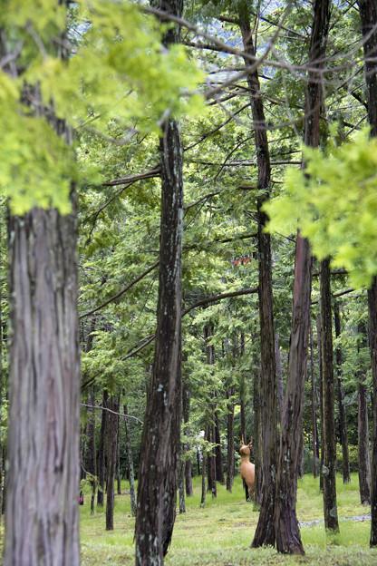 弥生の森の守り神