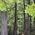 Photos: 弥生の森の守り神