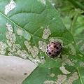 Photos: 害虫が食った葉