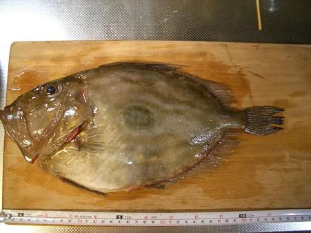 佐渡の魚 (かすけ商店)