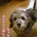 写真: 110126 みらく of the day 1
