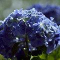 Photos: 青い輝き