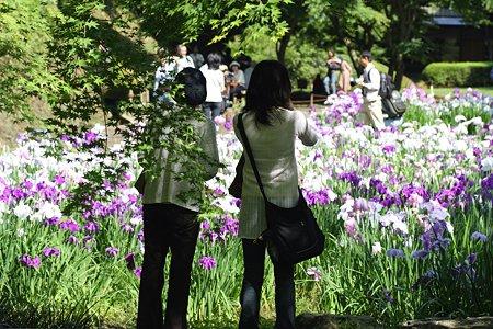 2009.06.07 明月院 本堂後庭園 花菖蒲と親子