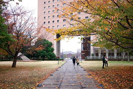2010.11.22 みなとみらい 桜の紅葉