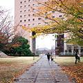 Photos: 2010.11.22 みなとみらい 桜の紅葉
