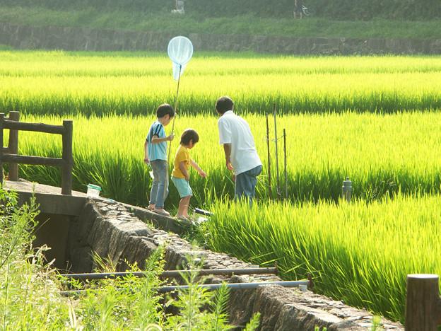 Photos: やがては貴き記憶となりぬ・F村の夏:2008_0802_dimageA1_PICT0081