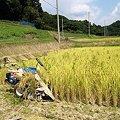 Photos: 実りの秋・収穫:2007_0825_olymp_E-500_8259264