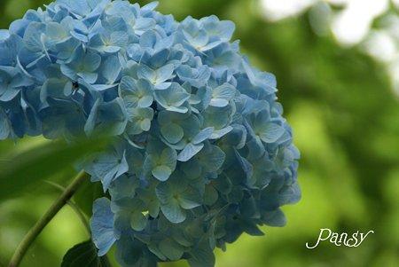 明月院ブルー・・4
