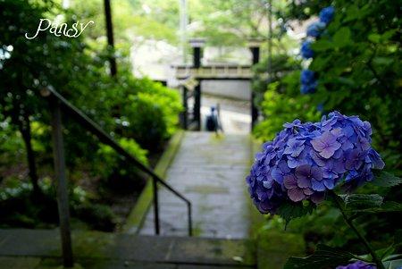 名残りの紫陽花と・・石段・・