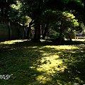 Photos: green・・