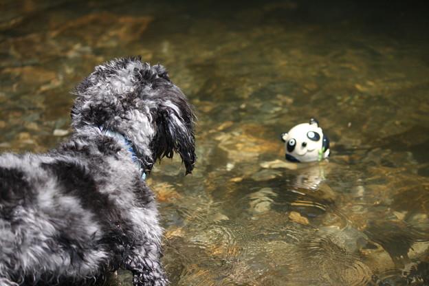 Photos: ボールが目の前にあるも取りに行けない