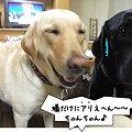 Photos: ありえへ~ん!