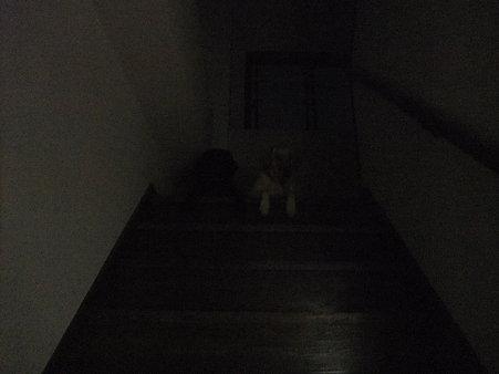 暗闇の中に何か浮かび上がる