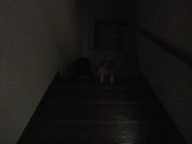 Photos: 暗闇の中に何か浮かび上がる