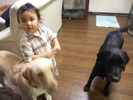 大型犬でも平気な子供