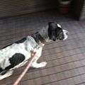 Photos: 普通に歩くやん!!