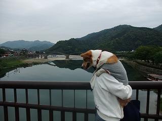 2009_0516錦帯橋に行く0080
