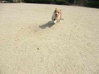 2009_0615今朝の公園で0012