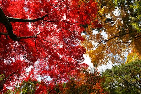 紅葉と黄葉の競演!(101124)