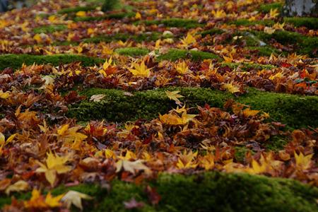 苔庭に散ったモミジ!(101124)