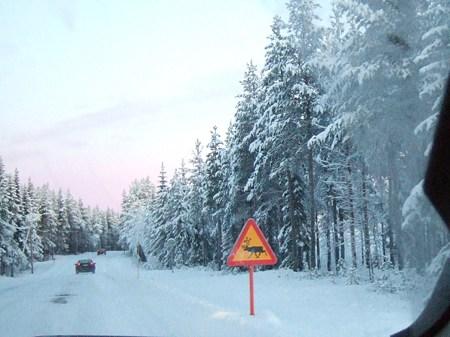 051202 トナカイ(Sweden Kiruna)