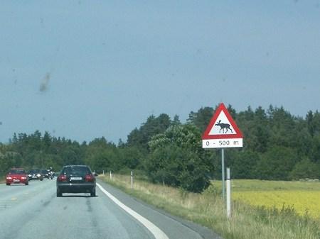 050709 ヘラジカ(Norway)