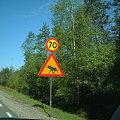 写真: 040531 ヘラジカ (Sweden Hallered)