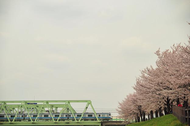 Photos: 桜並木を行く