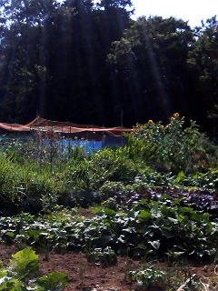 Summer Dream 26 - 市民菜園