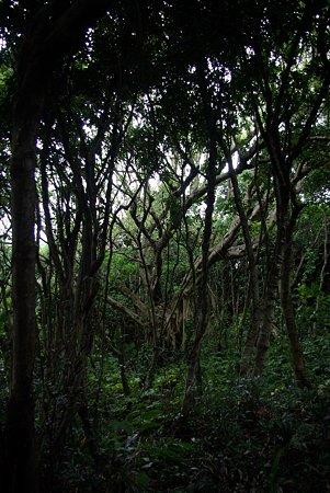 通りすがりの林