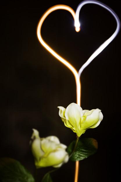写真: 花の心