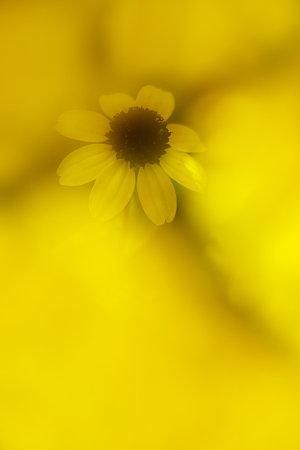黄色いラッピング