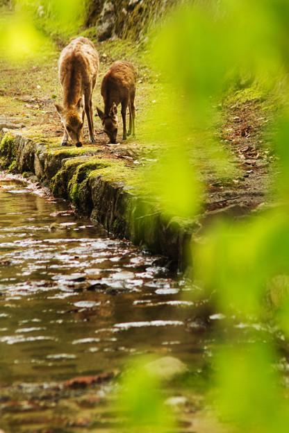 写真: 鹿のいる町