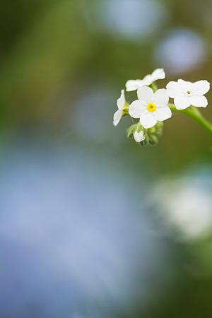 小さな花達
