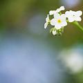 Photos: 小さな花達
