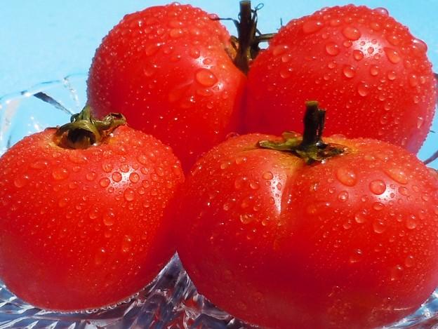 完熟・トマト・収穫♪