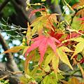 写真: 紅葉始まる