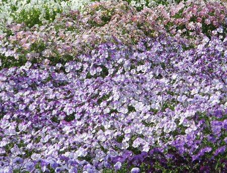 flowerpark konan-210525-10
